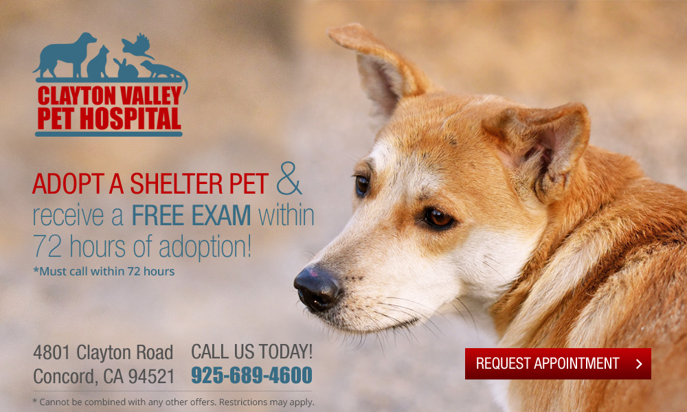 clayton_valley_adopt_shelter_pet